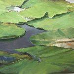 Kornelis Ram Detail Waterlelies Lac de Crena